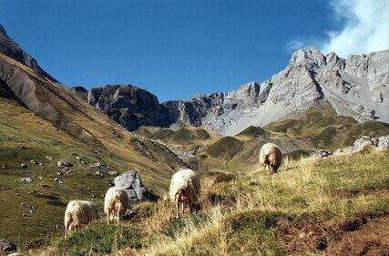 El cordero en el norte de España