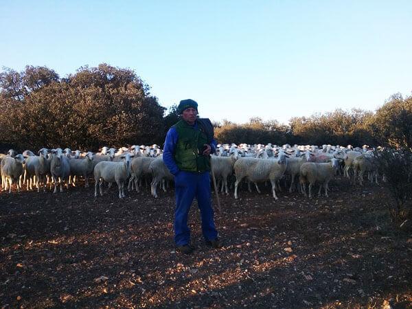 Amado Lizarra con su rebaño de ovejas en Bello (Teruel)