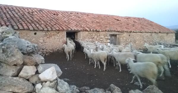 paridera pastores