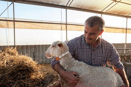 oficio pastor ovejas