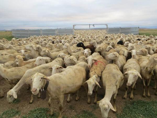 El pastoreo, una nueva apuesta por el turismo rural