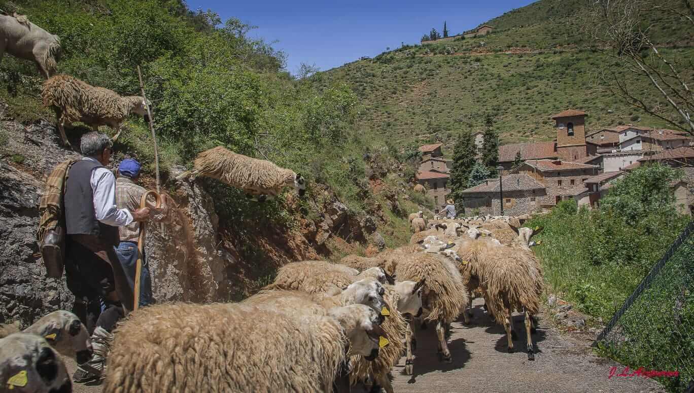 Cañada de Burgos