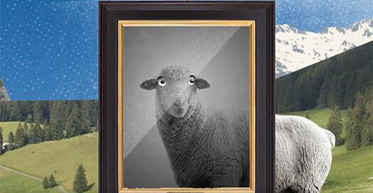 Las desconocidas y grandes historias de tres ovejas que querían ser alguien en la vida
