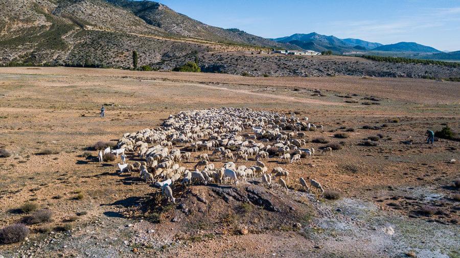 El sector ovino y caprino en la economía del mundo rural en la UE