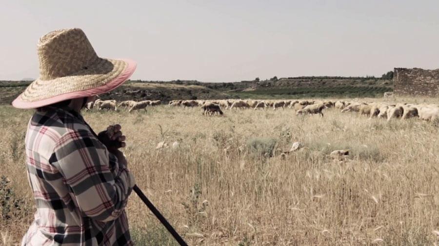 Pastoras y ganaderas, el papel de la mujer en la cría de cordero.
