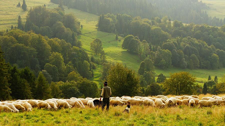 El pastoreo como herencia familiar. Oficio de padres a hijos.