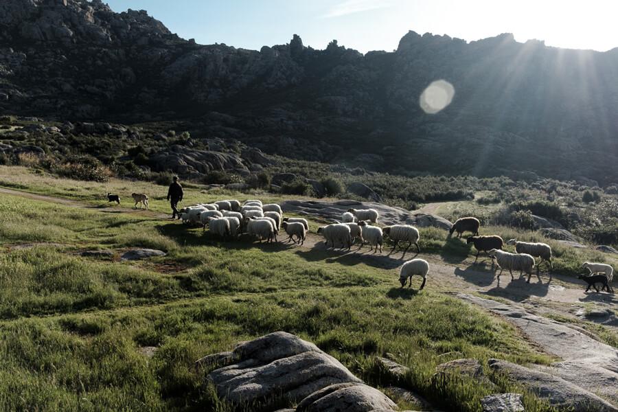 ¿Pastoreo contra el fuego? Las carnes de ovino y caprino son nuestras grandes aliadas para la prevención de incendios forestales